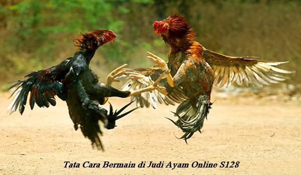 Tata Cara Bermain di Judi Ayam Online S128
